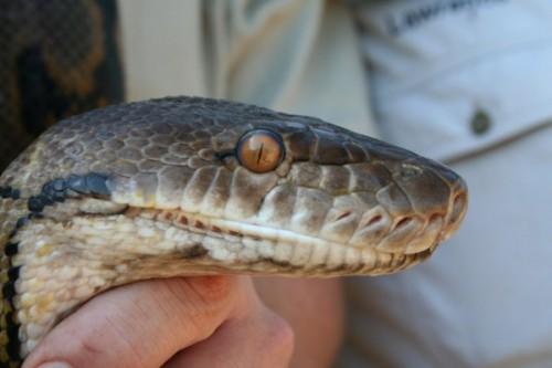 Snake-Centre